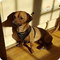 Adopt A Pet :: Rocky - West Allis, WI