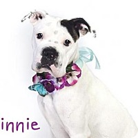 Adopt A Pet :: *MINNIE - Sacramento, CA