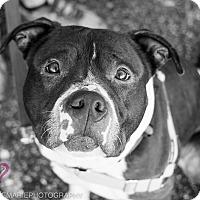 Adopt A Pet :: Griswold - Grand Rapids, MI