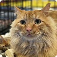Adopt A Pet :: Archie - Atlanta, GA