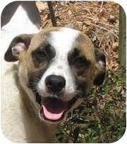 Terrier (Unknown Type, Medium) Mix Dog for adoption in Thomaston, Georgia - Brayden