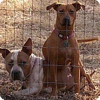 Adopt A Pet :: Buttons & Bean - Sacramento, CA