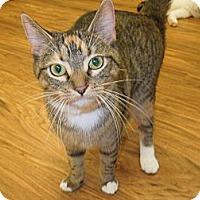 Adopt A Pet :: Virginia - Medina, OH