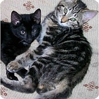 Adopt A Pet :: Mira and Tyra - Syracuse, NY