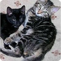 Adopt A Pet :: Mira and Tyra - Syracuse, NY