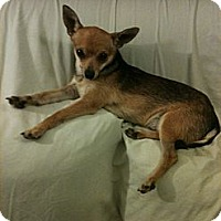 Adopt A Pet :: Dylan - Anaheim, CA