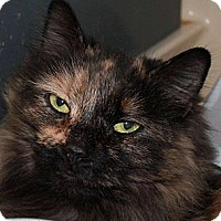 Adopt A Pet :: Molly - Saranac Lake, NY