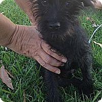 Adopt A Pet :: Frankie - Oceanside, CA