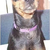 Adopt A Pet :: Waseem - Phoenix, AZ