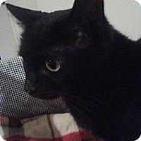Adopt A Pet :: Maxine - Columbia, MD