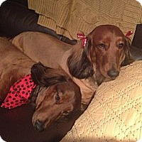 Adopt A Pet :: HELMUT & URSULA - Portland, OR