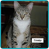 Adopt A Pet :: Trinity - Miami, FL