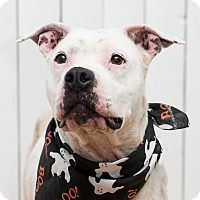 Adopt A Pet :: Sasha - Westfield, NY