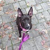 Adopt A Pet :: Tessa - Medford, MA