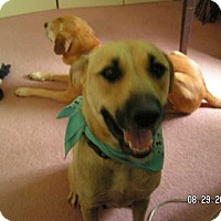 Adopt A Pet :: Mocha - Manhasset, NY