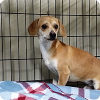 Adopt A Pet :: COMET - Lubbock, TX