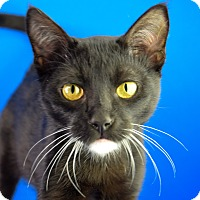 Adopt A Pet :: Astro - Carencro, LA