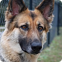 Adopt A Pet :: Halle - Ormond Beach, FL