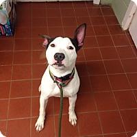 Adopt A Pet :: Minnie - Long Beach, NY