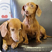 Adopt A Pet :: Tuna and Noodles - Harmony, Glocester, RI