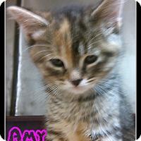 Adopt A Pet :: amy - Muskegon, MI