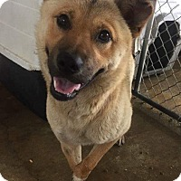 Adopt A Pet :: Chance **FOSTER NEEDED** - Joliet, IL