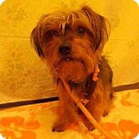 Adopt A Pet :: MAX - Upper Marlboro, MD