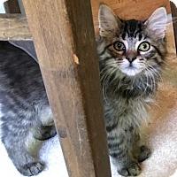 Adopt A Pet :: Steel - Potomac, MD