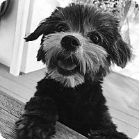 Adopt A Pet :: Dakota - Los Angeles, CA