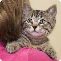 Adopt A Pet :: Josie - Sioux Falls, SD