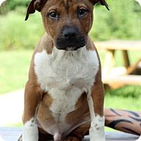 Adopt A Pet :: Eli - Waldorf, MD