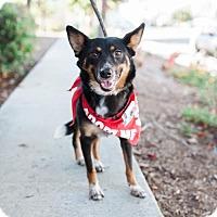 Adopt A Pet :: Mako - San Diego, CA
