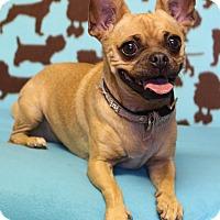 Adopt A Pet :: Gigi - Winters, CA