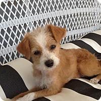 Adopt A Pet :: Annie Carr - Fresno, CA