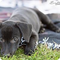 Adopt A Pet :: Tiny - Monroe, NC