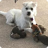 Adopt A Pet :: Chance - Manhattan, KS