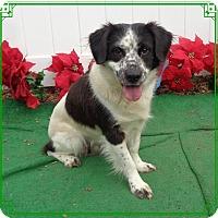 Adopt A Pet :: GOONIE -1 see GOONIE-2 - Marietta, GA