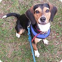Adopt A Pet :: Abby - East Hartford, CT