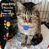 Adopt A Pet :: Miss Kitty - Temecula, CA
