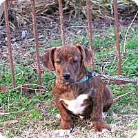 Adopt A Pet :: KIXX - Bedminster, NJ