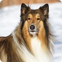 Adopt A Pet :: Duke - Ile-Perrot, QC