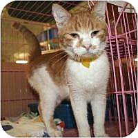 Adopt A Pet :: Felipe - Tucson, AZ