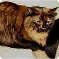 Adopt A Pet :: Heinz - Lombard, IL