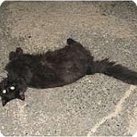 Adopt A Pet :: Smokey&Gizmo - Clay, NY