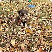 Adopt A Pet :: Bandicoot - Saskatoon, SK
