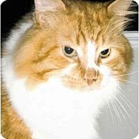 Adopt A Pet :: Austin - Medway, MA