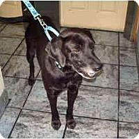 Adopt A Pet :: AJ - Scottsdale, AZ