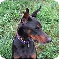 Adopt A Pet :: Manny - New Richmond, OH