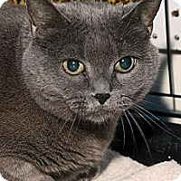 Adopt A Pet :: Morgan - Westfield, MA