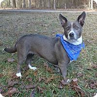 Adopt A Pet :: Charlotte - Mocksville, NC